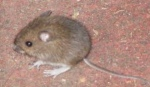 Not a Creature Was Stirring, Except for One LittleMouse