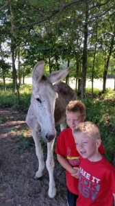 Carter and Caden with Festus
